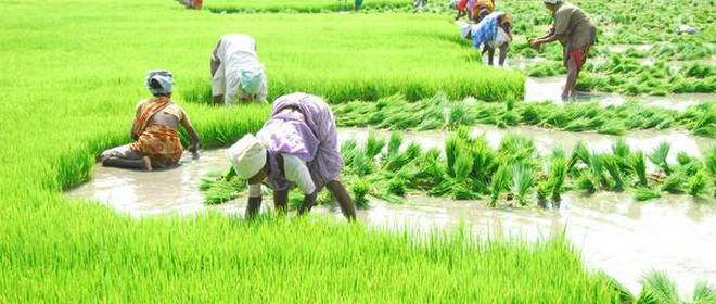 Bihar govt launches new crop insurance scheme