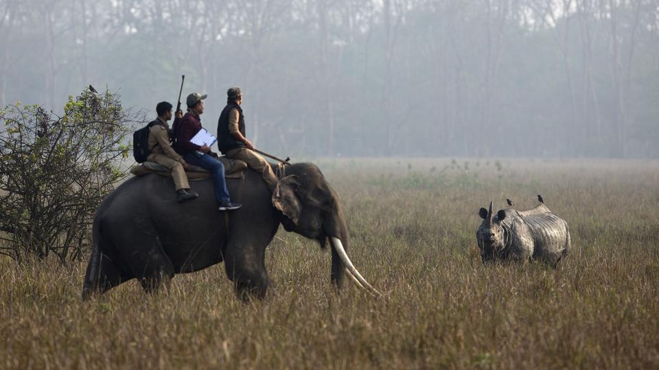 Animal kingdom declared as legal entity
